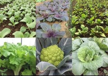 有機栽培, 有善耕作, 環境教育